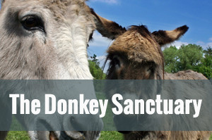 The Donkey SANCTURAY