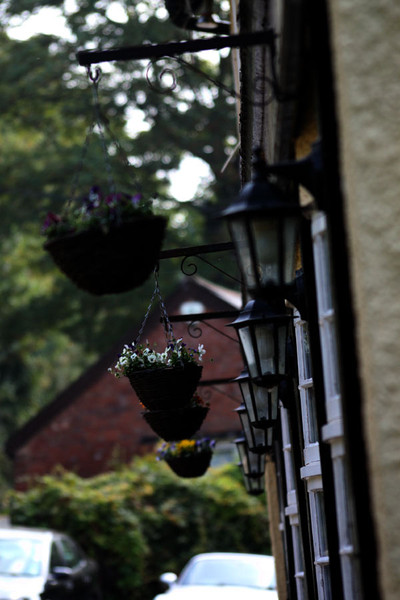The Royal Oak - Hanging Basket