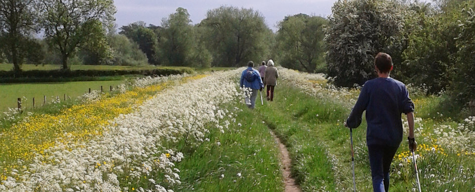 Group nordic walking on country path york