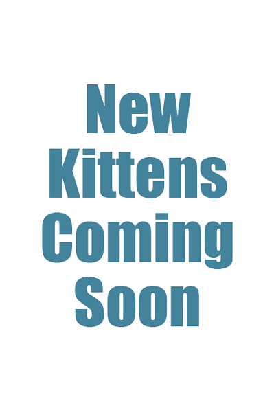 New Kittens Coming Soon