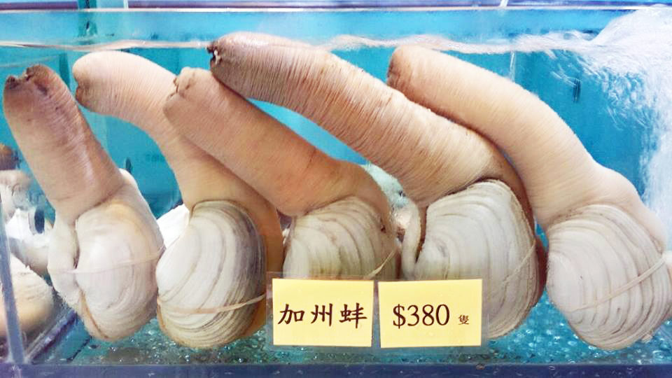 Weird Food in Hong Kong | Geoduck | Eating Adventures